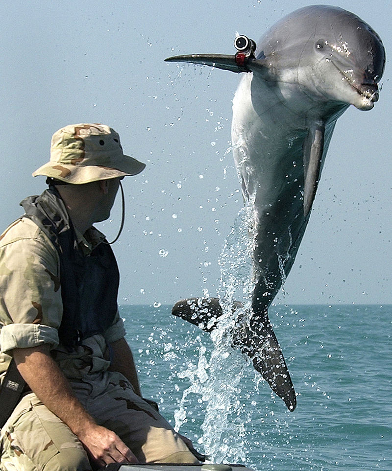 Боевые дельфины, голуби-шпионы, вороны-разведчики. Правда или вымысел?