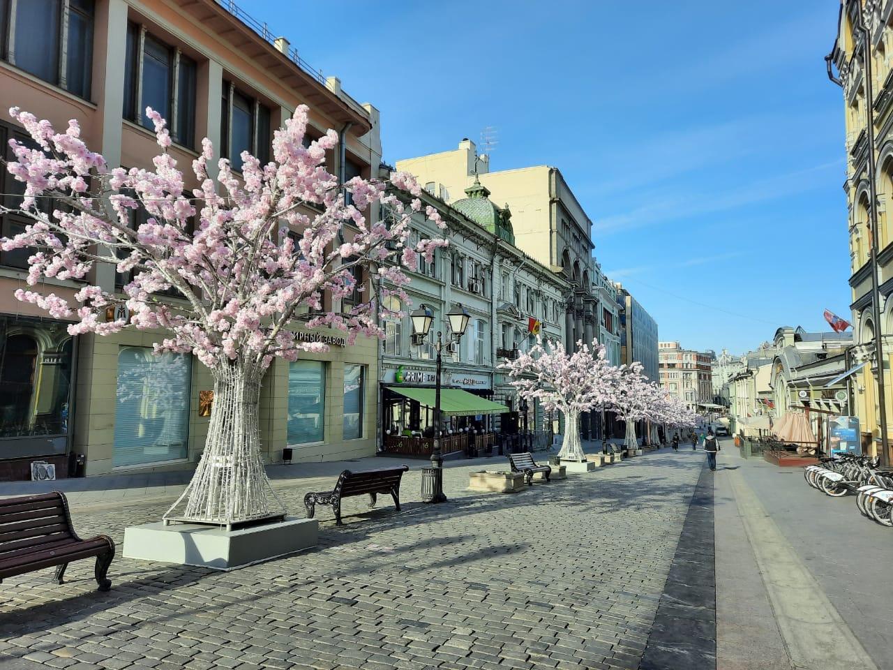 """Искусственные деревья в столице или красивый """"потёмкинский лес"""""""